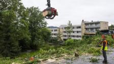 Audio «Kanton Freiburg regelt Umgang mit Laubholz-Schädling» abspielen