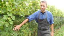 Audio «Die Weinbauern reagieren auf den Klimawandel» abspielen