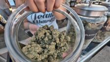 Audio «Bund verweigert Berner Cannabis-Studie das grüne Licht» abspielen