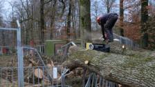 Audio «Sturm Burglind hinterlässt Spuren im Tierpark Bern» abspielen