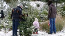 Audio «Weihnachtsbaum zum selber Schneiden bei Zürchern äusserst beliebt» abspielen