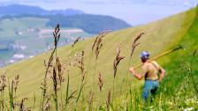 Audio «Schweizer Bauern – Produzenten oder Landschaftsgärtner?» abspielen