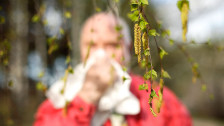 Audio «Pollenalarm! Jetzt kommen auch Nichtallergiker ins Niessen» abspielen