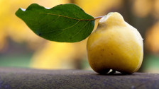 Audio «Quitten – Renaissance einer Traditionsfrucht» abspielen