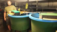 Audio «Karpfen statt Kühe: Fischzucht auf dem Bauernhof» abspielen