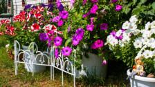 Audio «So überstehen Gartenpflanzen den Winter» abspielen