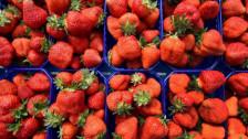 Audio «Günstige Erdbeeren auf Kosten der Umwelt» abspielen