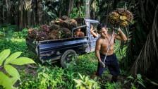 Audio «Zustände in Honduras werfen schiefes Licht auf Palmöl-Label» abspielen