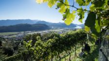 Audio «Weinland Schweiz: Das Tessin» abspielen