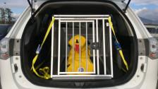 Audio «TCS-Crashtest zeigt gravierende Mängel bei Hundegeschirr auf» abspielen