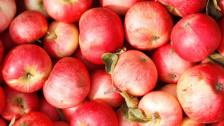 Audio «Apfelpreise wie an der Börse» abspielen