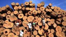 Audio «Brasilianische Bäume als Investment» abspielen