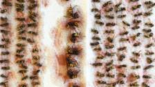Audio «Wespenfalle hält nicht, was sie verspricht» abspielen