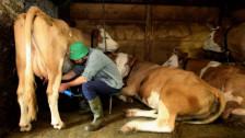 Audio «Tiefer Milchpreis: Faire Milch ist nicht gleich faire Milch» abspielen