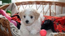 Audio «Ökobilanz: Ein Hund ist so umweltschädlich wie ein Europaflug» abspielen