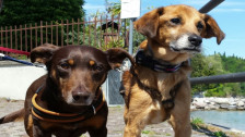 Audio «Jeder zweite Hund in der Schweiz kommt aus dem Ausland» abspielen