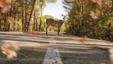 Audio «Blinklichter warnen Autofahrer vor Rehen» abspielen