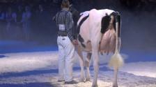 Audio «Nationalrat berät Verbot von Zitzenklebern bei Kühen» abspielen