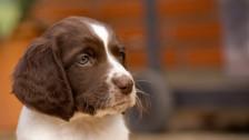 Audio «Die meisten Online-Hundeinserate verstossen gegen das Gesetz» abspielen