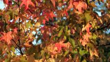 Audio «Herbstlaub» abspielen
