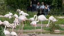 Audio «Opus Zoo: Zoogespräche - Hans Wackernagel» abspielen