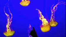 Audio ««20.000 Meilen unter den Meeren» von Jules Verne 2/2» abspielen