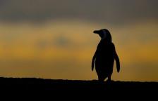 Audio «Premiere: «Dunkler Pinguin» von Woody Allen» abspielen