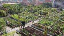 Audio «Urban Farming im städtischen Kreislauf» abspielen