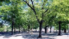 Audio «Der Stadtbaum: der sympathische Held» abspielen