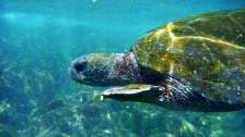 Audio «Galapagos - wenn der Tourismus ein Paradies bedroht» abspielen