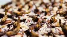 Audio «Von der Plage zur Delikatesse – Insekten essen?» abspielen