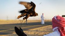 Audio «Wenn Frauen in den Golfstaaten übernehmen» abspielen