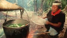 Audio «Ayahuasca – eine Droge zwischen Urwald und Grossstadt» abspielen