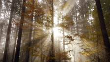 Audio «Der Wald und die Nachhaltigkeit» abspielen