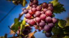 Audio «Die Wilden der Weinwelt – neue Richtungen im alten Kulturgut» abspielen