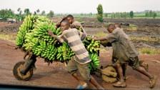 Audio ««In Goma weiss man nie» Alltag in der ostkongolesischen Stadt 2/2» abspielen