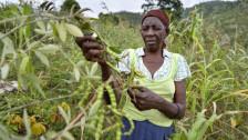 Audio «Klimahelden (2/2): Haiti und Schottland» abspielen