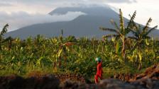 Audio «Sommerserie 1963: Die Reise in den Kongo» abspielen