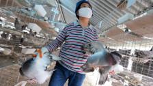 Audio «Wie gefährlich ist die neue Vogelgrippe?» abspielen