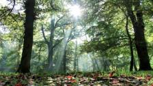 Audio «Wald im Klimawandel» abspielen