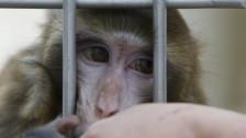Audio «Was bringen neue Affenversuche?» abspielen