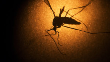 Audio «Spätfolgen des Zika-Virus» abspielen