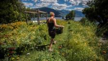 Audio «Arche Noah für Pflanzen» abspielen