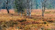 Audio «Biodiversität – Die Massnahmen genügen nicht» abspielen