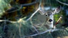 Audio «Im Kommen: Gentests im Naturschutz» abspielen