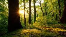 Audio «Im Wald» abspielen
