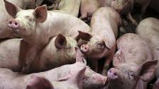 Audio «EU-Parlament debattiert hellgrüne Landwirtschaftspolitik» abspielen
