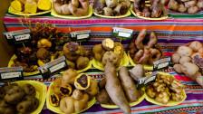 Audio «Kartoffeln als Lebensversicherung gegen den Klimawandel» abspielen