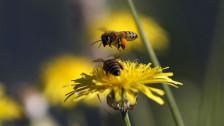 Audio «Weniger Pestizide - mehr biologische Vielfalt» abspielen