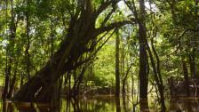 Audio «Amazonas-Regenwald – die grüne Lunge der Welt» abspielen